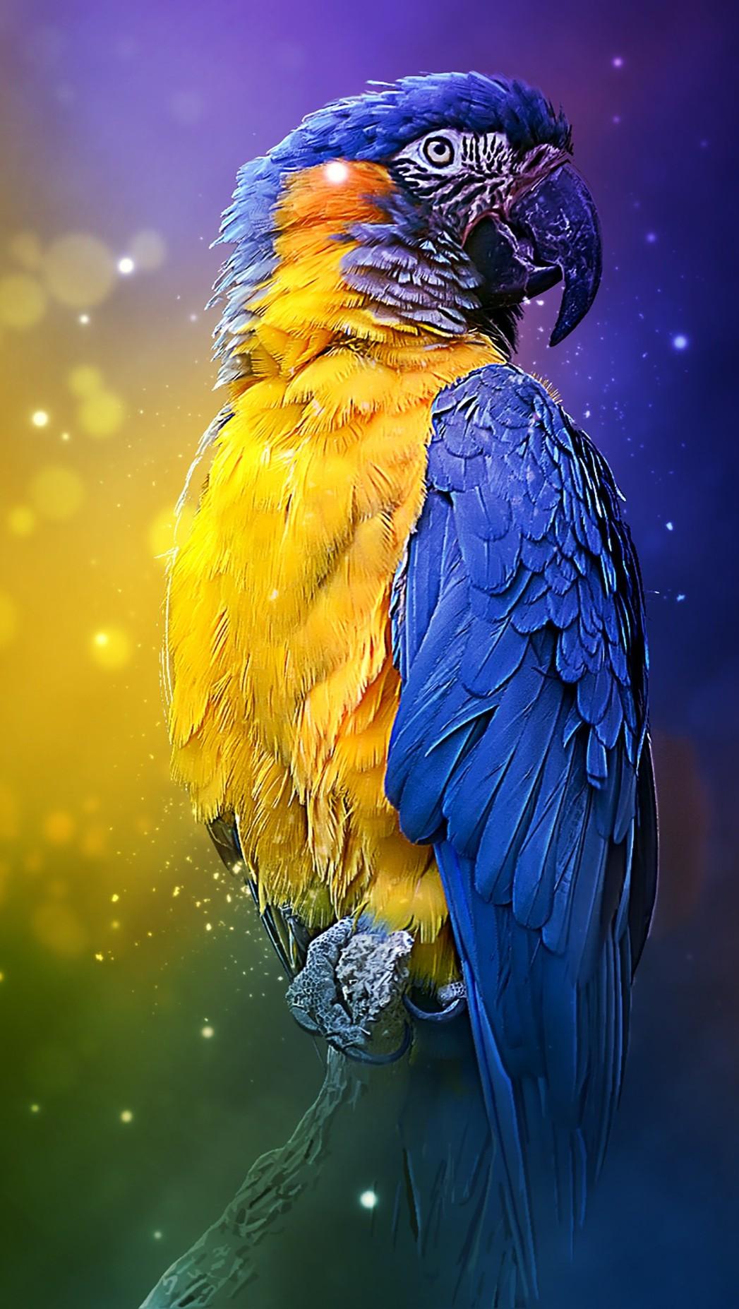 parrot-3250578_1920